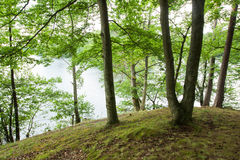 The landscape in the forest Royalty Free Stock Photography