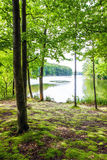The landscape in the forest Royalty Free Stock Image
