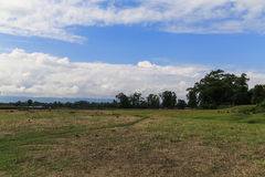 The landscape in the forest park in chitwan,Nepal Royalty Free Stock Photography