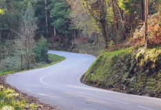 Forest road landscape in Spain royalty free stock photography