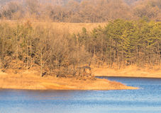 Landscape of a forest and shoreline of a lake Royalty Free Stock Photo
