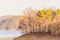 Landscape of a forest and shoreline of a lake Royalty Free Stock Photography