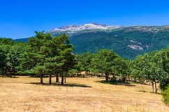 Landscape of a forest on the side of a mountain royalty free stock image