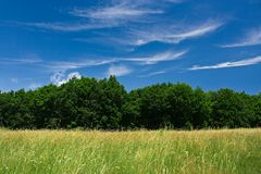 Landscape with forest and sky. Forest in a sunny day with sky and white clouds Royalty Free Stock Photos