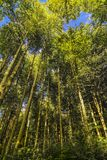 A forest with tall and green trees. Landscape with a forest with tall and green trees Stock Photography