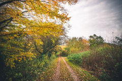 Landscape with a forest trail in the fall. Surrounded by colorful trees in autumn colors and leaves covering the path Royalty Free Stock Photography