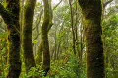 Landscape, Forest, Trees, Jungle Stock Photos