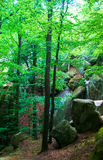 Landscape  forest trees  rocks. Landscape in the forest trees among the rocks Royalty Free Stock Photography
