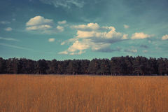 Landscape forest vintage colors Royalty Free Stock Photography