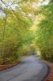 Roadd in autumn forest royalty free stock photo