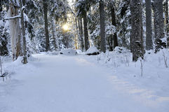 Landscape of forest in winter Stock Images