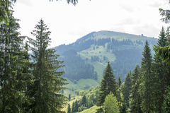 Landscape with forested mountain Royalty Free Stock Photography