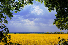 Landscape frame. Lovely landscape framed by leaves around Stock Photo