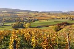Landscape of France, the Burgundy region: autumn vineyard Stock Photo