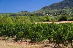Landscape with vineyard. Landscape in France with Vineyard, hills, village and blue sky stock images