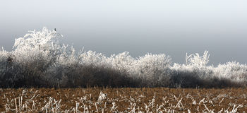 Landscape with freezing fog Stock Photography