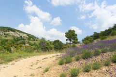 Landscape in the French Drome Royalty Free Stock Photo