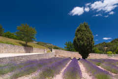 Landscape French Luberon Stock Photography