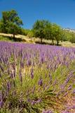 Landscape French Luberon Stock Photos