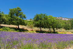 Landscape French Luberon Royalty Free Stock Photography