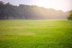 Landscape fresh green lawn Royalty Free Stock Photos