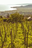 Landscape fro a grape line in springtime in Hungary.  royalty free stock photography