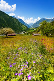 Landscape in front of Swiss mountains Royalty Free Stock Photography