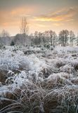 Landscape with frost Royalty Free Stock Photo