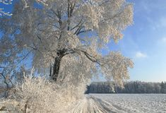 Landscape with a frosty tree stock photos