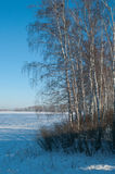 Landscape with frozen birches Royalty Free Stock Photography