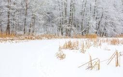 Landscape of frozen lake covered by snow Royalty Free Stock Images
