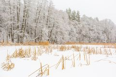 Landscape of frozen lake covered by snow Royalty Free Stock Photos