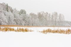 Landscape of frozen lake covered by snow Stock Photos