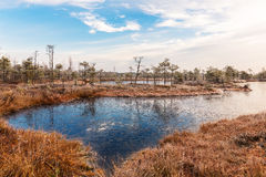 Landscape with the frozen plants and the hoar-frost. Frosty morning in raised bog. Stock Images