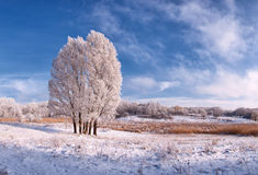 Landscape with frozen tree Royalty Free Stock Photography