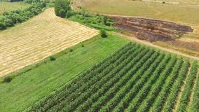 Landscape with fruit orchards, wheat fields, aerial video. Landscape with fruit orchards, wheat fields and plot of scorched earth, aerial video stock video