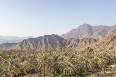 Landscape in Fujairah, UAE royalty free stock image