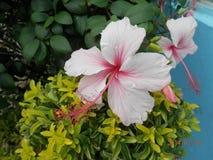 Landscape Garden Beauty Stock Images