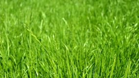 Green grass meadow, blue sky and sunlight in summer, nature background. Landscape, garden and natural environment concept - Green grass meadow, blue sky and stock footage