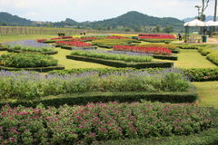 Landscape garden in Thailand. Cut hedgerow in a landscape garden in Thailand Stock Image