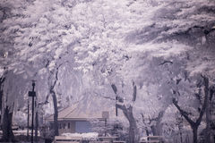 Landscape garden tree and grass(Infra-red photo ). Infra-red photo Landscape garden tree Royalty Free Stock Photos