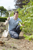 Landscape Gardener Planting Hedge Stock Photography