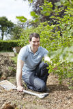 Landscape Gardener Planting Hedge Stock Images
