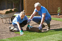 Landscape Gardeners Laying Turf For New Lawn Royalty Free Stock Image