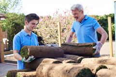 Landscape Gardeners Laying Turf For New Lawn. Landscape Gardeners Lay Turf For New Lawn Royalty Free Stock Image