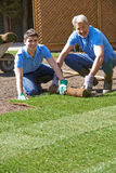 Landscape Gardeners Laying Turf For New Lawn. Portrait Of Landscape Gardeners Laying Turf For New Lawn Royalty Free Stock Photo
