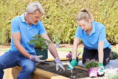 Landscape Gardeners Planting In Flower Bed. Two Landscape Gardeners Planting In Flower Bed stock image