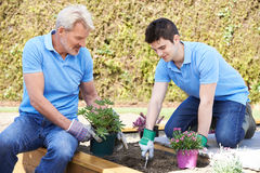 Landscape Gardeners Planting In Flower Bed Royalty Free Stock Photo
