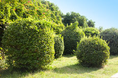 Landscape gardening Royalty Free Stock Photo