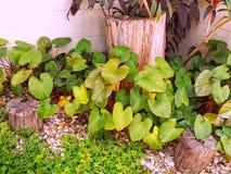 Landscape gardening. Stock Photos